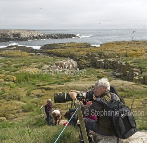 Man photographing birds on the Farne Islands, off the coast of Northumberland, England.