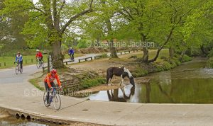 Cyclists passing a horse drinking at the river in the New Forest, England