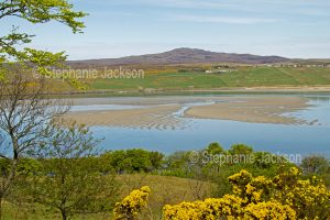 Landscape with golden flowers of gorse in the fields surrounding Loch Eriboll in Scotland. Scottish lake
