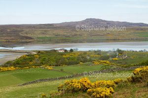 Scottish landscape dominated by golden flowers of gorse in the fields surrounding Loch Eriboll. lake in SCotland.