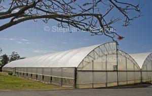 Plastic covered greenhouse on farm in Australia