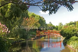 Red arched bridge over lake in Japanese gardens in Toowoomba, Queensland Australia