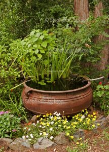 Australian gardening, pond / water feature with irises surrounded by flowering plants in Australia