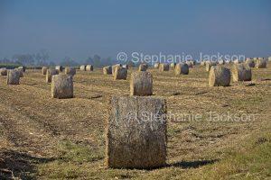 Round bales of sugar cane mulch in farm field in Queensland Australia