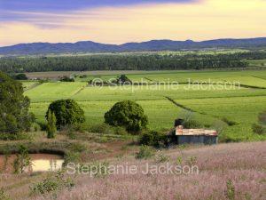 Rural landscape with sugar cane fields in Queensland Australia