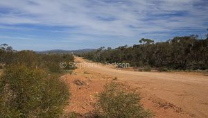 Outback road through bushland near Nymagee in NSW Australia