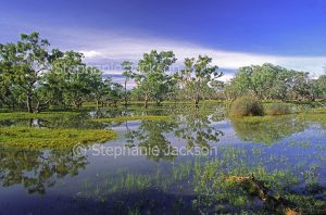 Australian outback landscape, near Hungerford in NSW, transformed into a picturesque oasis after a deluge of rain.
