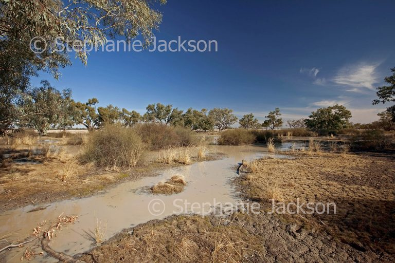 Muddy pools of water on cracked dry ground of outback plains after shower of rain near Tilpa in NSW Australia.