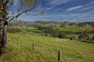 Green valley hemmed by low hills near Dungog in NSW Australia.