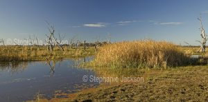 Panoramic landscape - Bunnor wetlands near Moree in NSW Australia.