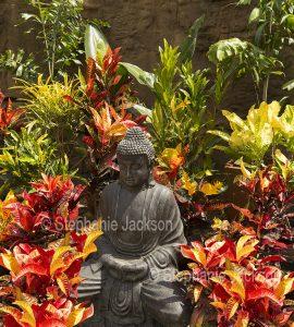 Cluster of Crotons, Codiaeum variegatum, surrounding a statue of Buddha.