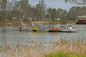 Vehicular / car ferry crossing the Murray River at Swan Reach