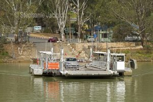 Vehicular / car ferry crossing the Murray River at Swan Reach South Australia.