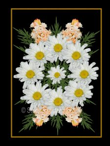 Floral art design. White daisies, apricot flowers and emerald green foliage on black background.