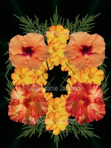 Floral art design. orange and red hibiscus and yellow cosmos flowers on black background.