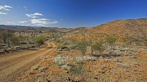 Road through landscape of Gammon Ranges National Park in northern / outback South Australia