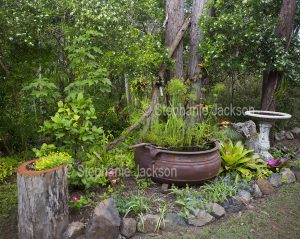 Garden with water feature and bird bath.