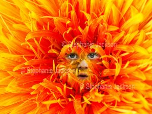 Close-up of orange flower of a Gerbera bauerii nobleflora cultivar with a face peering from among the petals
