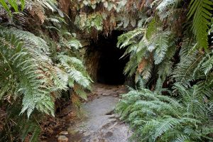 Fern covered entrance to glow worm tunnel / old railway tunnel, in Wollemi National Park in NSW Australia