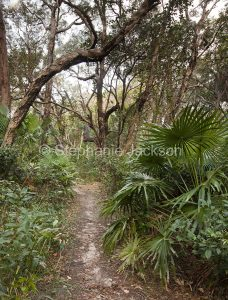 Walking track through coastal bushland of palm trees and paperbarks in Hat Head National Park in NSW Australia