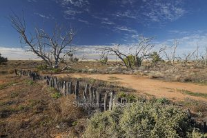 Australian outback landscape and weathered posts of old fence in Sturt National Park in NSW Australia