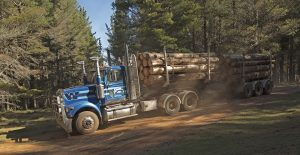 Logging truck with load of timber in Nowendoc State Forest in NSW Australia