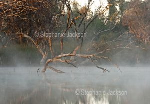 Morning mist over a billabong at Eulo in outback Queensland Australia.
