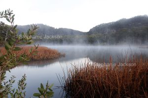 Australian landscape at dawn, with mist rising from calm waters of lake hemmed with golden reeds and forests at Dunn's swamp in Wollemi National Park in NSW Australia