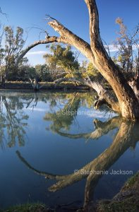 Murrumbidgee River near the town of Maude in western NSW Australia.