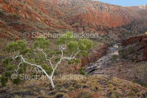 Ormiston Gorge in the West MacDonnell Ranges, in the outback, Northern Territory, Central Australia