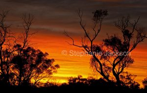 Sunset with trees silhouetted against fiery red and orange sky at Yowah in outback Queensland Australia.