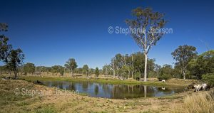 Landscape with lagoon in cattle grazing country in central Queensland Australia.