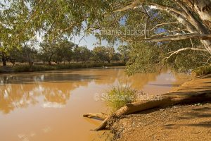 Tranquil waters of Paroo River hemmed by woodlands in Currawinya National Park in outback Queensland Australia