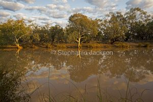 Woodland trees reflected in water of Paroo River in Currawinya National Park in outback Queensland Australia