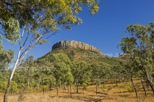 Lords Table Mountain and woodlands in Peak Range National Park in outback Queensland Australia