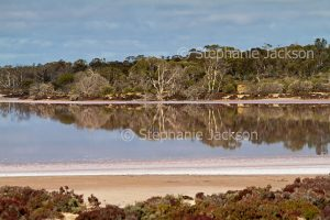 Trees of woodlands reflected in pink water of Lake Crozier in Murray Sunset National Park in outback Victoria Australia