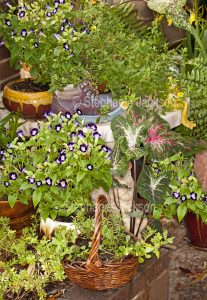 Container gardening, an assortment of plants growing in decorative containers.