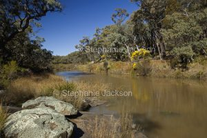Tranquil river / stream through forests of Kings Plains National Park in NSW Australia