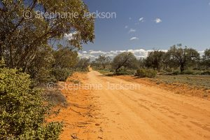 Australian outback landscape with red dirt road slicing through low woodlands under blue sky in Mungo National Park in NSW Australia