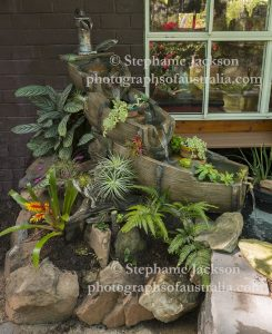 Water feature, with a waterfall and a rockery with ferns and bromeliads, beside a pond in a fernery.
