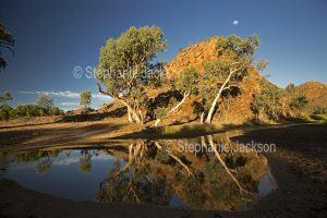 Eucalyptus / gum trees reflected in water of the Ross River in the East MacDonnell Ranges, in the outback, Northern Territory, Australia