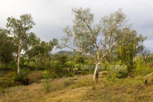 Woodland landscape near Lotus Creek in central Queensland Australia.