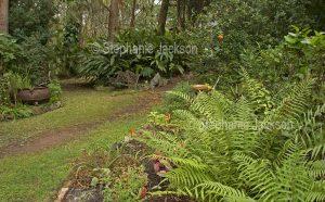 Australian sub-tropical garden with ferns