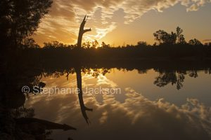 Golden sky at sunset reflected in the calm water of the Balonne River near Saint George in outback Queensland Australia
