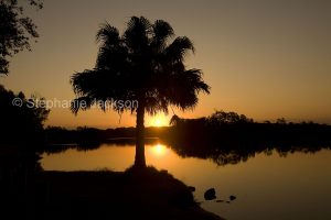 Sunset over the calm waters of the Myall River with palm tree silhouetted against the sky, near Hawk's Nest in NSW Australia