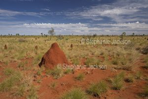 Outback landscape with termite mounds in the Northern Territory, Australia