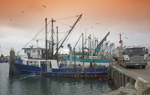 Commercial fishing boat / trawler unloading catch of tuna into truck at wharf in Port Lincoln South Australia