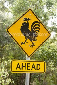 Unusual road sign warning drivers of roosters on the road ahead - in northern NSW.