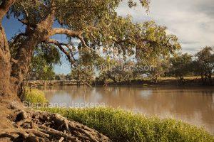Ward River near Charleville in outback Queensland Australia.