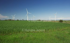 Wind turbines among a field of green wheat at Wattle Point wind farm on the York Peninsula in South Australia